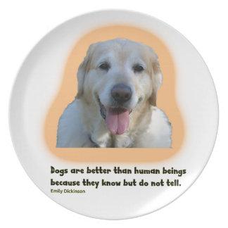 Prato Os cães são melhores do que seres humanos