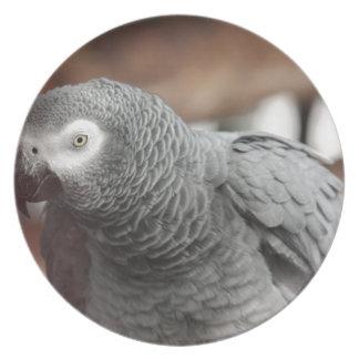 Prato Papagaio