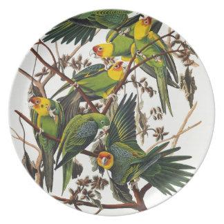 Prato Papagaio de Carolina - John James Audubon