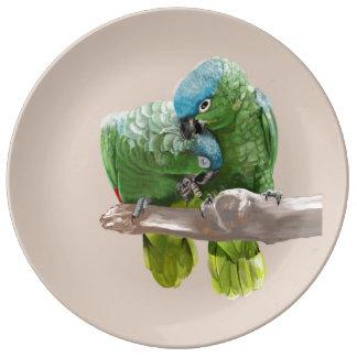 Prato Pares do papagaio
