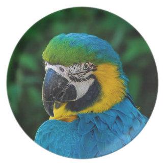 Prato Pássaro azul e amarelo