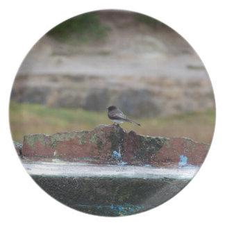 Prato pássaro em uma parede