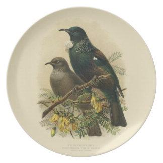 Prato Pássaros da ciência NZ do vintage - placa da