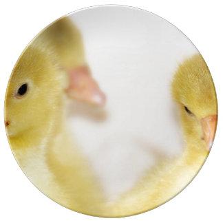 Prato Patinhos amarelos macios