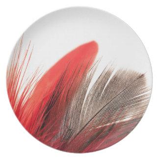 Prato Pena vermelha