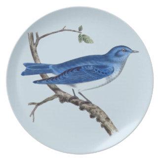 Prato Placa azul da melamina do pássaro do vintage