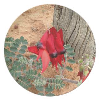 Prato Placa da foto da ervilha de deserto de Sturt