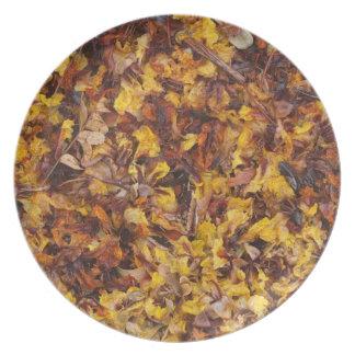 Prato Placa da foto da maca da folha