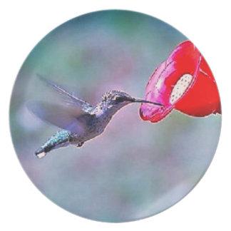 Prato Placa de alimentação do colibri