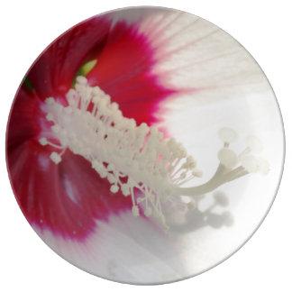 Prato Placa decorativa da porcelana da flor branca do