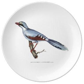 Prato Placa do corvo da caça