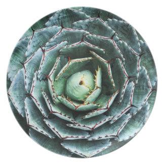 Prato Placa fotográfica da melamina do Succulent