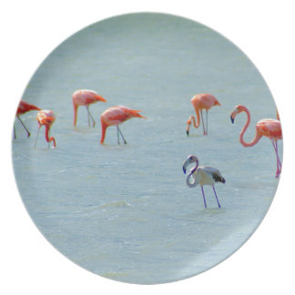 Prato Rebanho cinzento e cor-de-rosa dos flamingos no