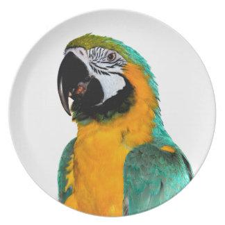 Prato retrato colorido do pássaro do papagaio do macaw