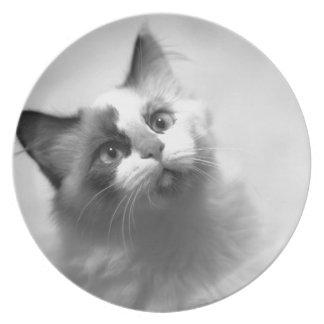 Prato Retrato preto e branco do gatinho