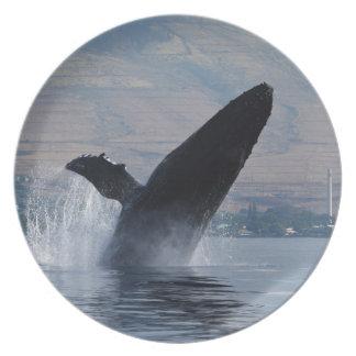 Prato rompimento da baleia do humback