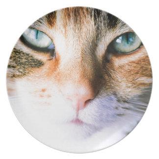 Prato Roxie o gato