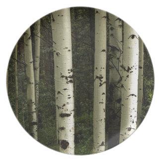 Prato Textura de um retrato da floresta