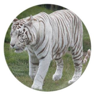 Prato Tigre branco