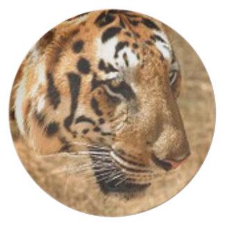 Prato Tigre que desengaça em India