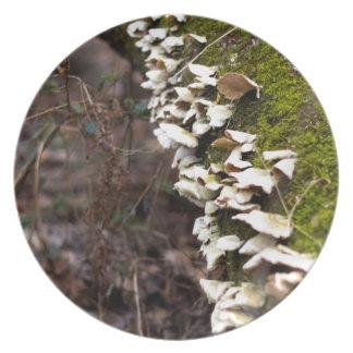 Prato tree_moss_winter mushroom_downed