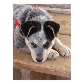 Prejuízo do filhote de cachorro cartão postal