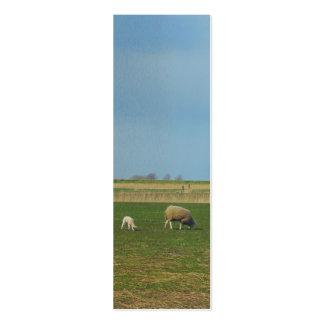 Presente do marcador da foto da paisagem dos carne cartao de visita