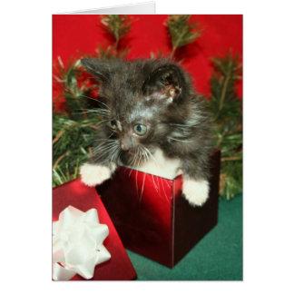 Presente do presente do gatinho do cartão do Natal