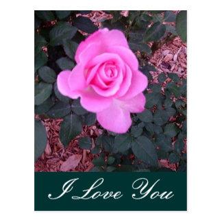 Presentes e mercadoria brilhantes do rosa do rosa cartão postal