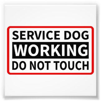 Preste serviços de manutenção ao cão que trabalha  impressão fotográficas