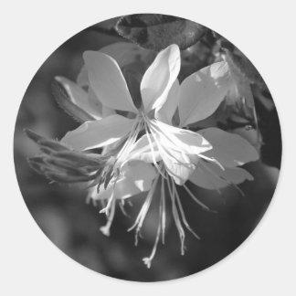 Preto & branco de Gaura Adesivo