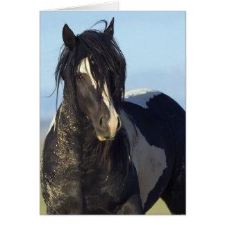 Preto & branco vem o cartão próximo do cavalo