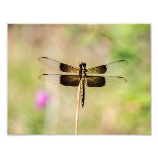 Preto e libélula do ouro impressão de foto