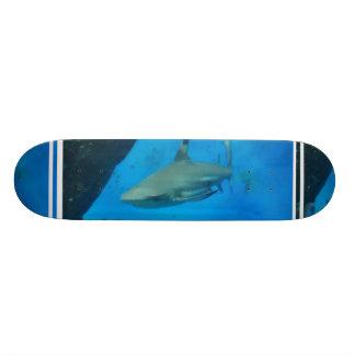 Preto pequeno skate derrubado do tubarão