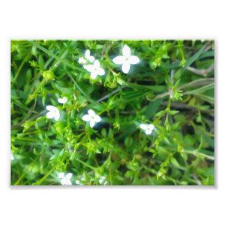 Primavera acima impressão de foto