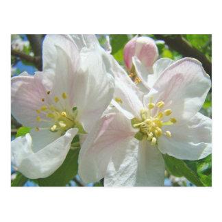 Primavera dos cartão das flores da flor da árvore
