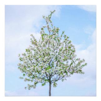 Primavera - felz pascoa impressão de foto