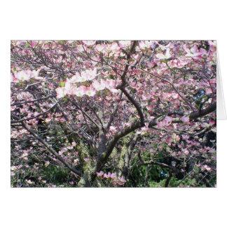 Primavera na flor cartao