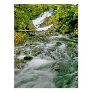 Primavera no cartão das cascatas
