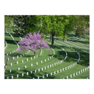 Primavera no cemitério nacional de Arlington Pôster