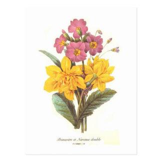 Primula e daffodils cartão postal