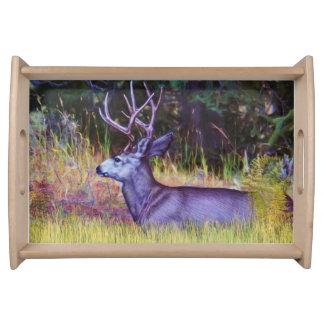 Príncipe da floresta, fanfarrão dos cervos de mula bandejas de servir