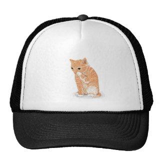 Produtos bonitos do gatinho boné