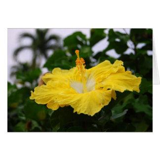 Profundamente - cartão amarelo do hibiscus