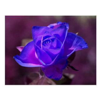 Profundamente - cartão do rosa do roxo