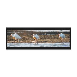 Projete o impressão das canvas dos Egrets de gado Impressão De Canvas Esticada