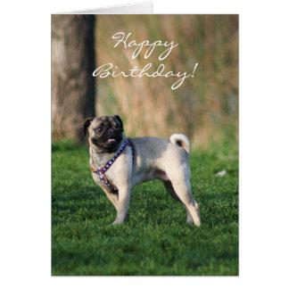 Pug do feliz aniversario no cartão do parque