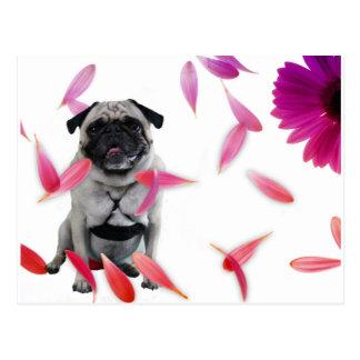 """Pug """"sexy"""" de Misha que levanta nas flores Cartão Postal"""