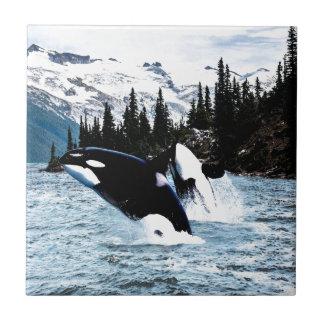 Pulando a orca