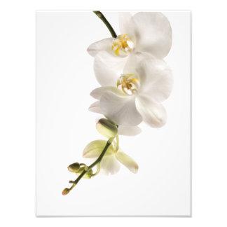 Pulverizador branco da flor da orquídea do impressão de foto
